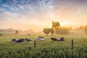 FURAB Mjölkproduktion